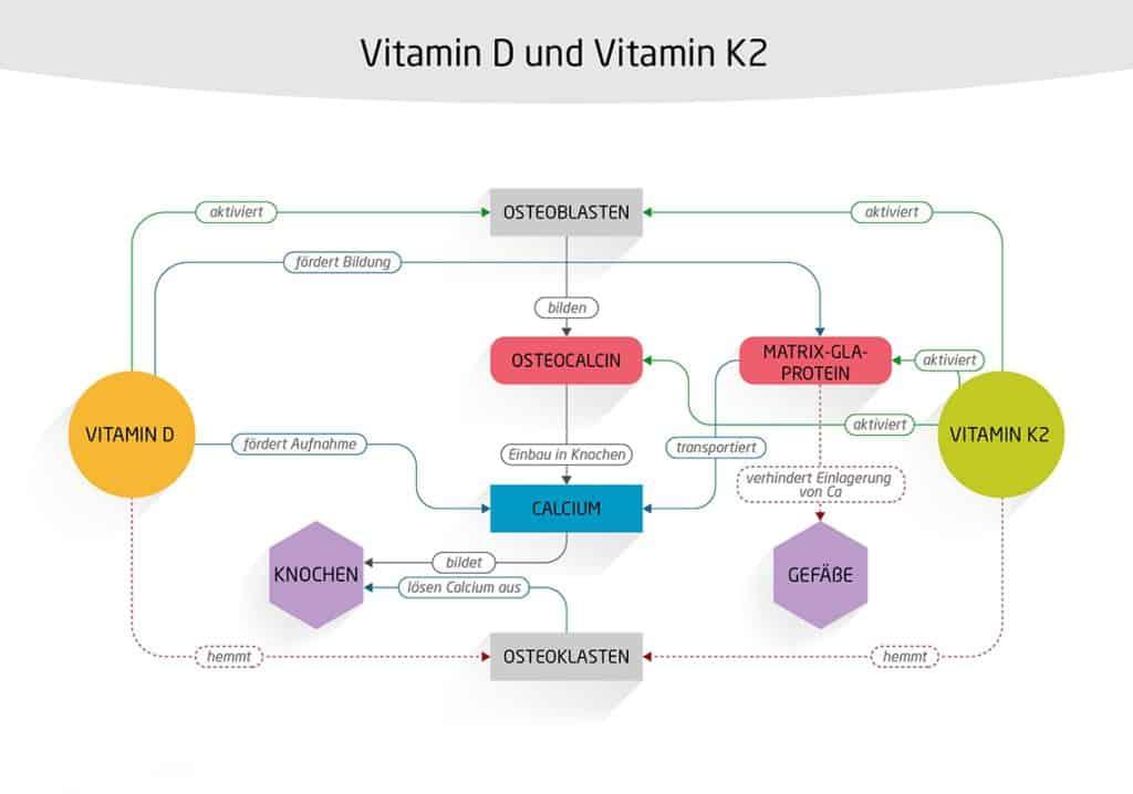 Vitamin D K Knochen Osteroklasten Osteoblasten Magnesium Calcium